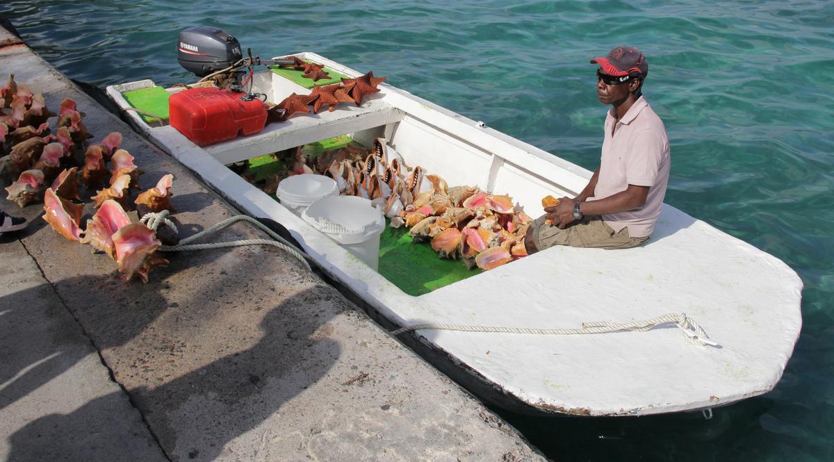 Nassau bahamas vendeur de coquillages si on porte une for Portent une coquille