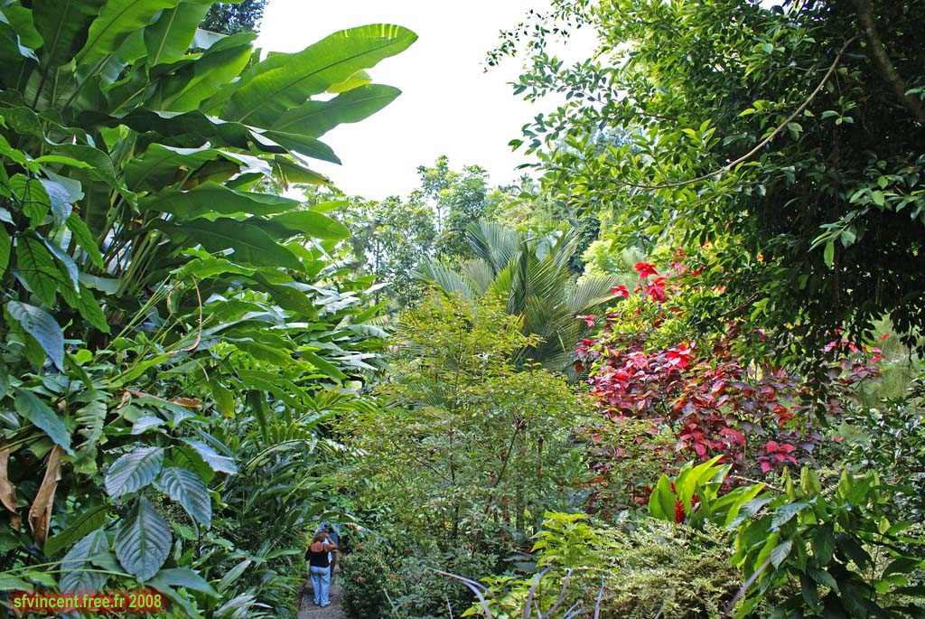 sainte lucie aux antilles jardin botanique non loin de